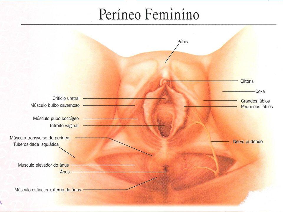 Vulva Também exige os sinais de hipertrofia, podendo manter os pequenos lábios entreabertos Tonalidade violácea (S.