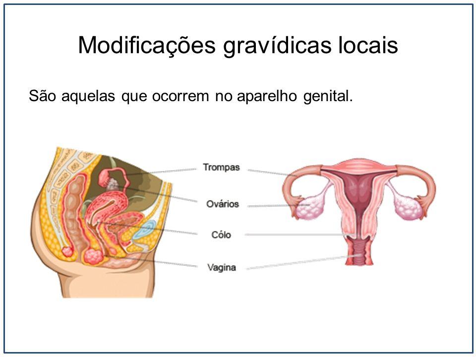 Modificações gravídicas locais São aquelas que ocorrem no aparelho genital.