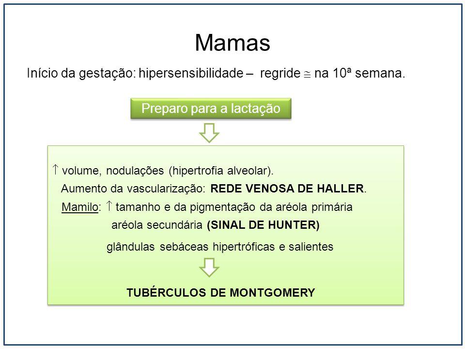 Mamas Início da gestação: hipersensibilidade – regride na 10ª semana. volume, nodulações (hipertrofia alveolar). Aumento da vascularização: REDE VENOS