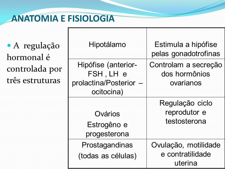 ANATOMIA E FISIOLOGIA A regulação hormonal é controlada por três estruturas HipotálamoEstimula a hipófise pelas gonadotrofinas Hipófise (anterior- FSH