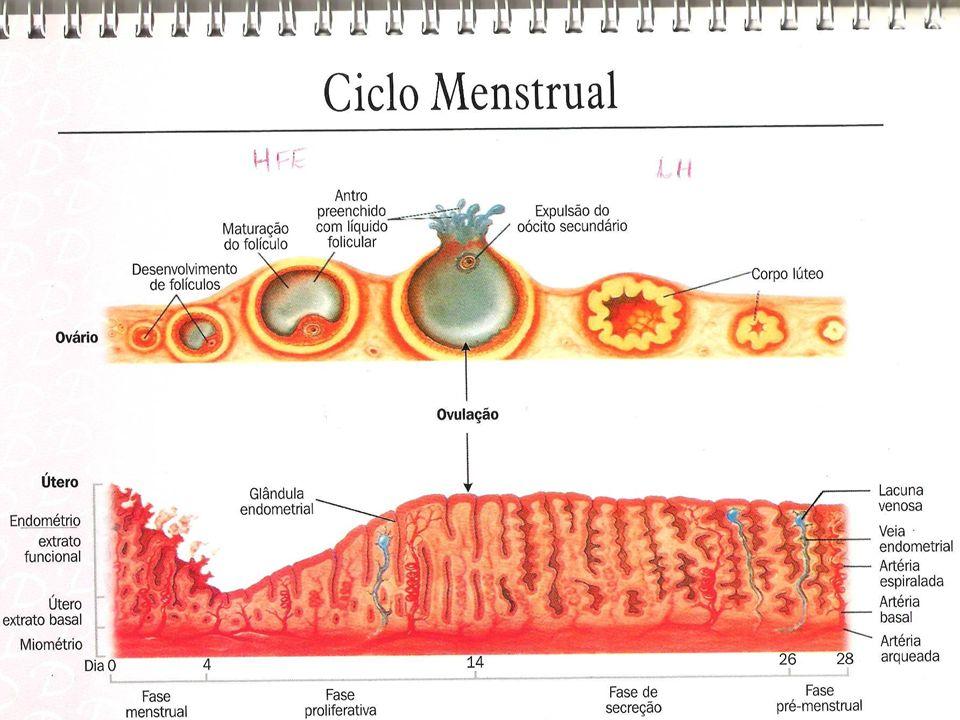 Sinais presumíveis/ duvidosos Amenorréia Náuseas/ vômitos Alterações nas mamas Polaciúria Cólicas Sialorréia Aumento volume abdominal Movimentação fetal