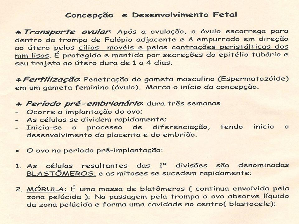 Sinais de probabilidade TOQUE VAGINAL: Sinal de Goodell (colo do útero amolecido) Sinal de Chadwick (coloração arrouxeada do colo) Sinal de Hegar (amolecimento do istmo, 6 a 8 semanas)