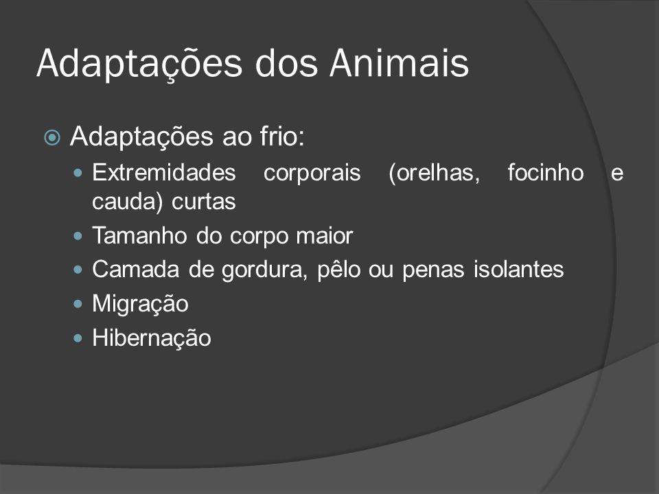 Adaptações dos Animais Adaptações ao frio: Extremidades corporais (orelhas, focinho e cauda) curtas Tamanho do corpo maior Camada de gordura, pêlo ou