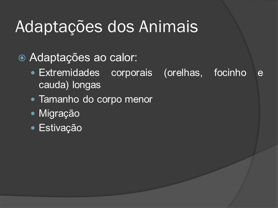 Adaptações dos Animais Adaptações ao calor: Extremidades corporais (orelhas, focinho e cauda) longas Tamanho do corpo menor Migração Estivação