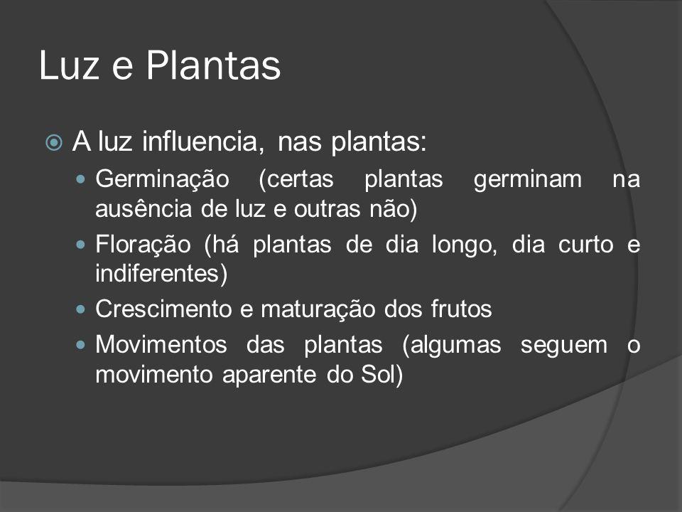 Luz e Plantas A luz influencia, nas plantas: Germinação (certas plantas germinam na ausência de luz e outras não) Floração (há plantas de dia longo, d