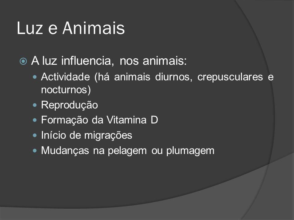 Luz e Animais A luz influencia, nos animais: Actividade (há animais diurnos, crepusculares e nocturnos) Reprodução Formação da Vitamina D Início de mi