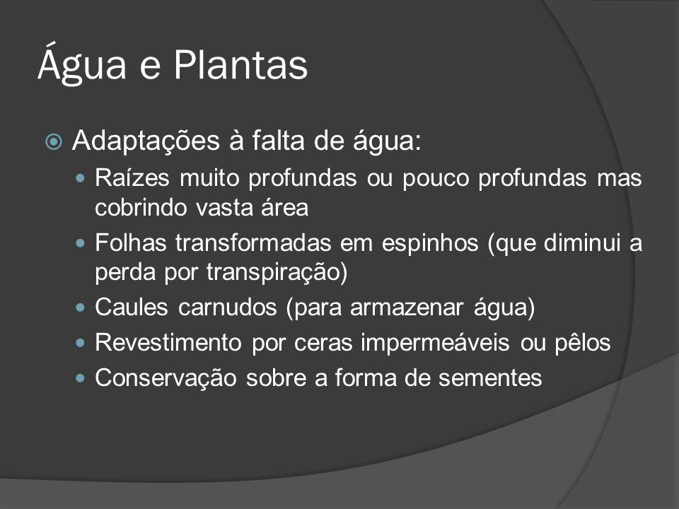 Água e Plantas Adaptações à falta de água: Raízes muito profundas ou pouco profundas mas cobrindo vasta área Folhas transformadas em espinhos (que dim