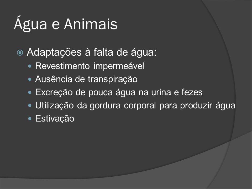 Água e Animais Adaptações à falta de água: Revestimento impermeável Ausência de transpiração Excreção de pouca água na urina e fezes Utilização da gor