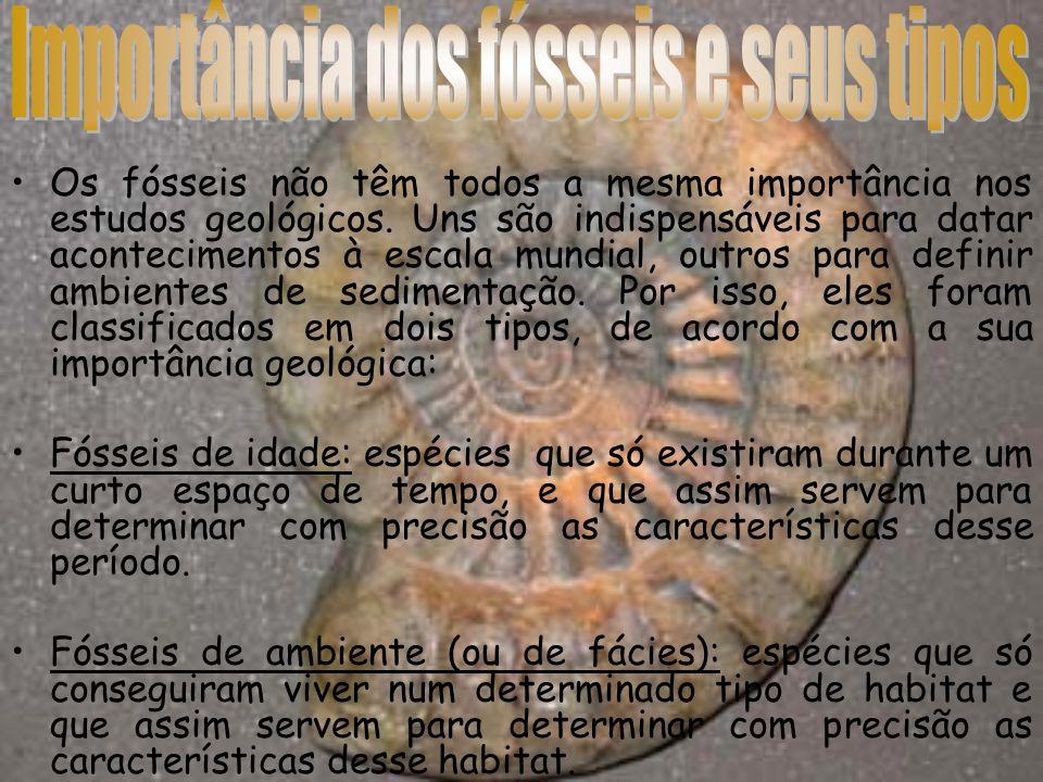 Os fósseis não têm todos a mesma importância nos estudos geológicos. Uns são indispensáveis para datar acontecimentos à escala mundial, outros para de