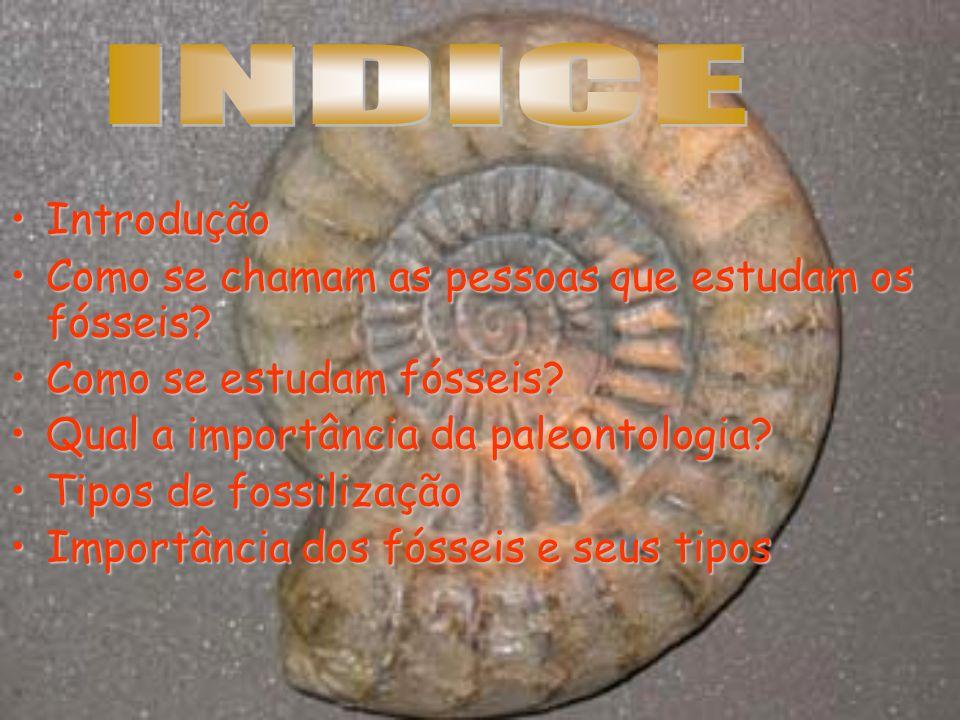 Fósseis são restos ou vestígios preservados de animais, plantas ou outros seres vivos em rochas, como moldes do corpo ou partes deste e pegadas.