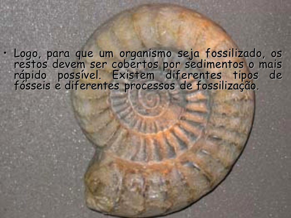 Os cientistas que fazem o papel de detectives de fósseis são chamados de Paleontólogos, pois o ramo da Geologia que se dedica ao estudo dos fósseis chama-se Paleontologia.
