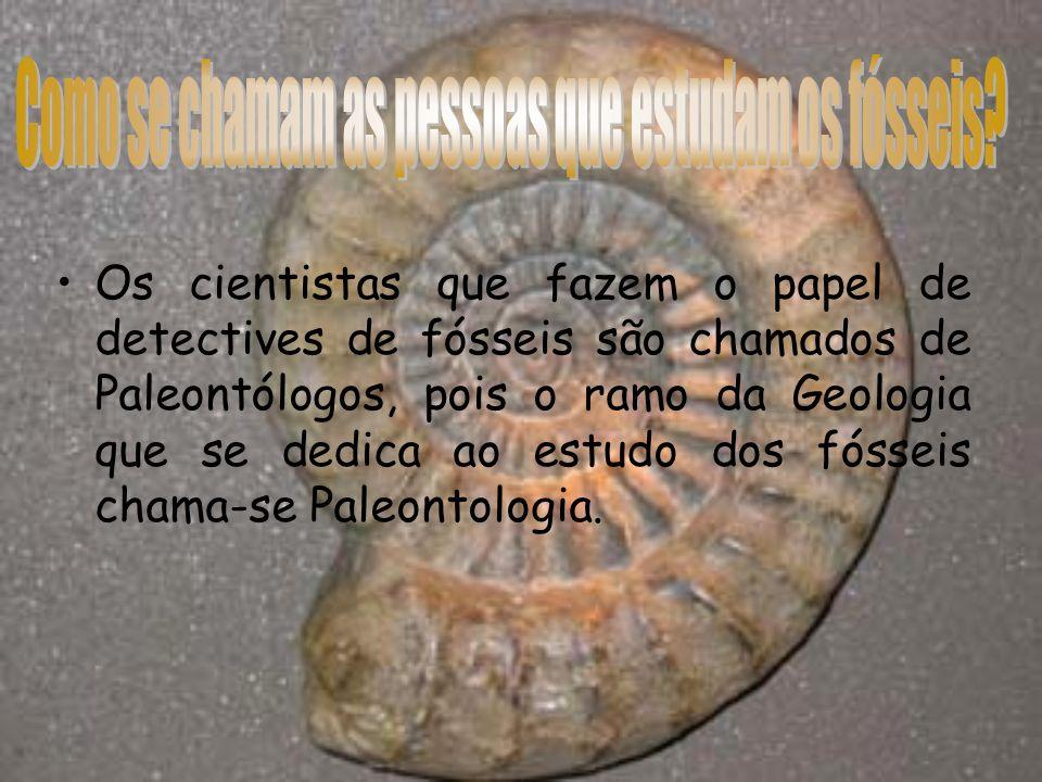 A paleontologia é a ciência que estuda os organismos que povoaram a terra ao longo do tempo e cujo os restos e marcas de actividade se encontram preservados nos sedimentos.