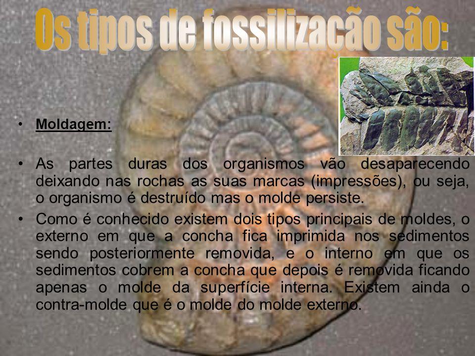 Mumificação: ou preservação total: Os restos dos organismos preservam-se total ou parcialmente, normalmente em materiais como o âmbar (resina fóssil), o gelo, turfa, etc.