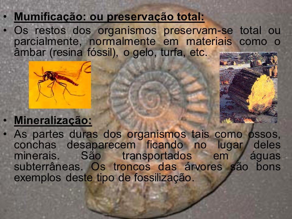Marcas fósseis: São pegadas ou até excrementos fossilizados.