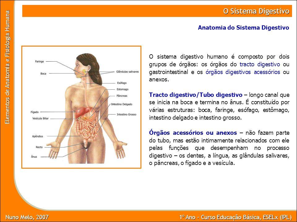 Nuno Melo, 2007 1º Ano - Curso Educação Básica, ESELx (IPL) Elementos de Anatomia e Fisiologia Humana O Sistema Digestivo O sistema digestivo humano é