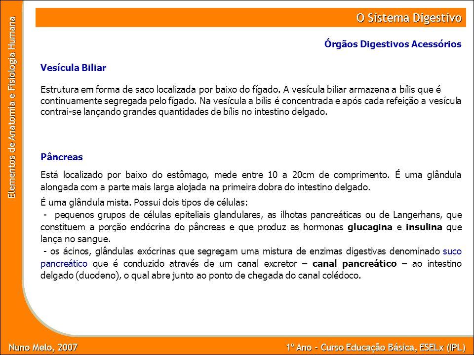 Nuno Melo, 2007 1º Ano - Curso Educação Básica, ESELx (IPL) Elementos de Anatomia e Fisiologia Humana O Sistema Digestivo Órgãos Digestivos Acessórios