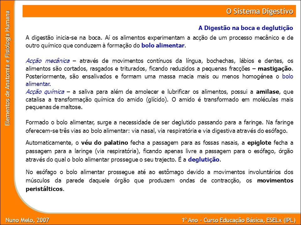 Nuno Melo, 2007 1º Ano - Curso Educação Básica, ESELx (IPL) Elementos de Anatomia e Fisiologia Humana O Sistema Digestivo A Digestão na boca e degluti