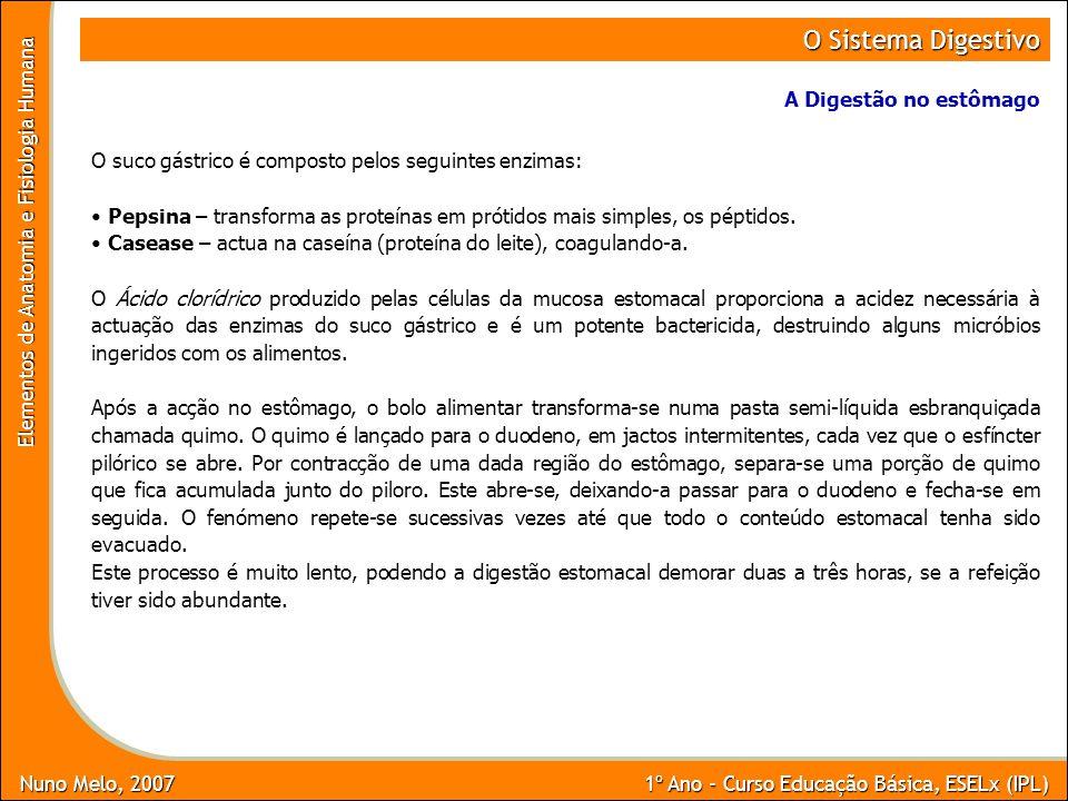 Nuno Melo, 2007 1º Ano - Curso Educação Básica, ESELx (IPL) Elementos de Anatomia e Fisiologia Humana O Sistema Digestivo A Digestão no estômago O suc