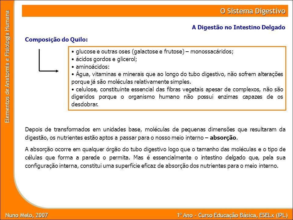 Nuno Melo, 2007 1º Ano - Curso Educação Básica, ESELx (IPL) Elementos de Anatomia e Fisiologia Humana O Sistema Digestivo A Digestão no Intestino Delg