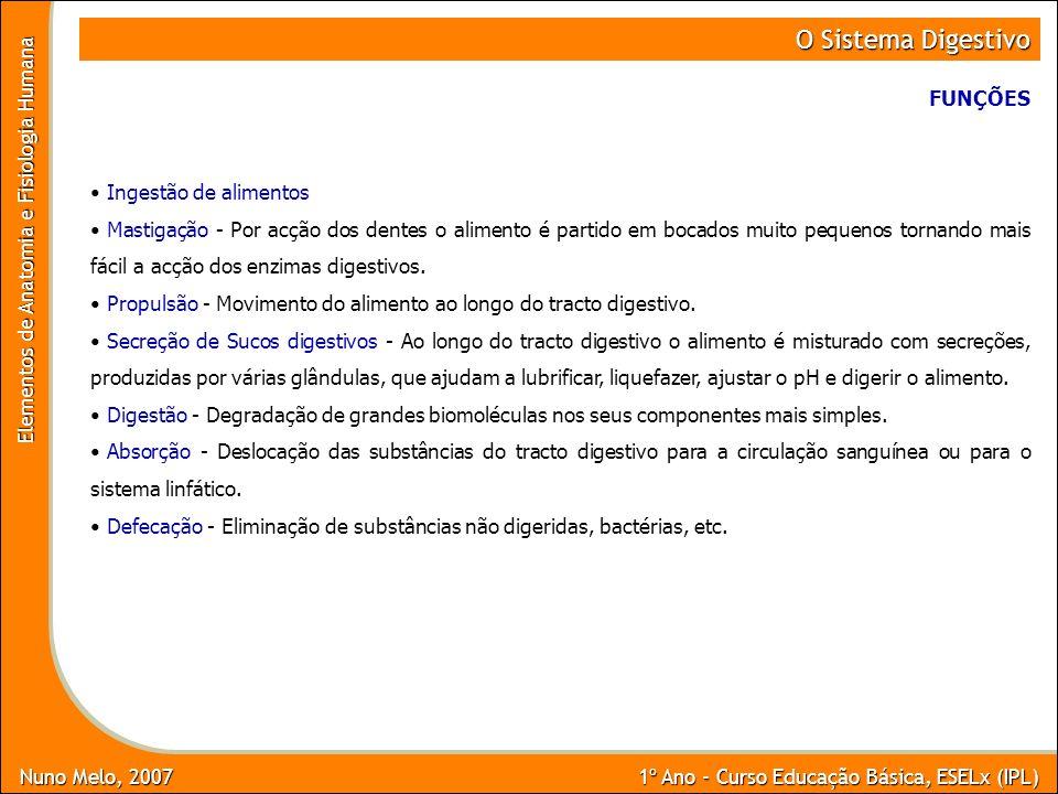 Nuno Melo, 2007 1º Ano - Curso Educação Básica, ESELx (IPL) Elementos de Anatomia e Fisiologia Humana O Sistema Digestivo Ingestão de alimentos Mastig