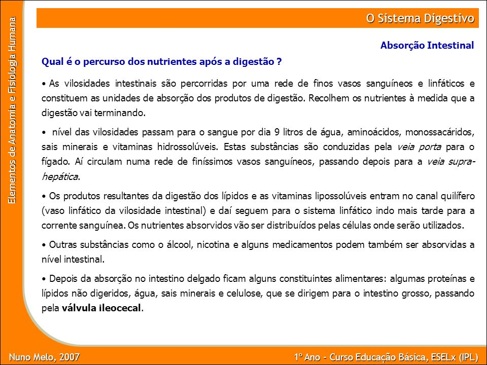 Nuno Melo, 2007 1º Ano - Curso Educação Básica, ESELx (IPL) Elementos de Anatomia e Fisiologia Humana O Sistema Digestivo Absorção Intestinal As vilos