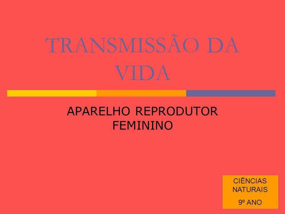 1 TRANSMISSÃO DA VIDA APARELHO REPRODUTOR FEMININO CIÊNCIAS NATURAIS 9º ANO