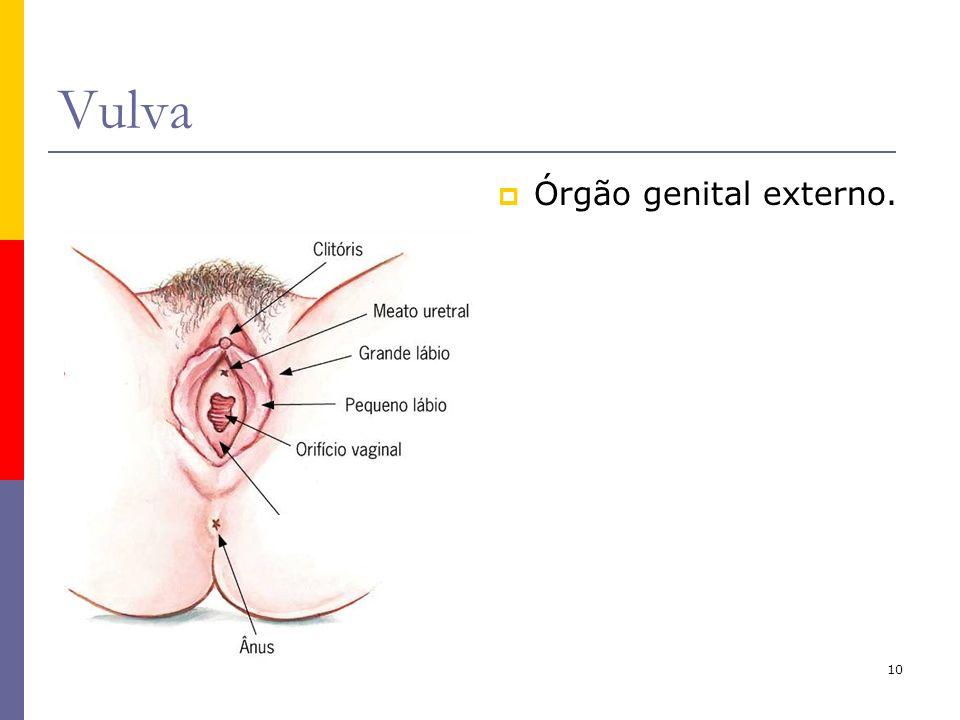 10 Vulva Órgão genital externo.