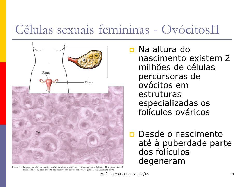 Prof. Teresa Condeixa 08/0914 Células sexuais femininas - OvócitosII Na altura do nascimento existem 2 milhões de células percursoras de ovócitos em e