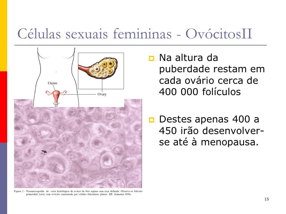 15 Células sexuais femininas - OvócitosII Na altura da puberdade restam em cada ovário cerca de 400 000 folículos Destes apenas 400 a 450 irão desenvo