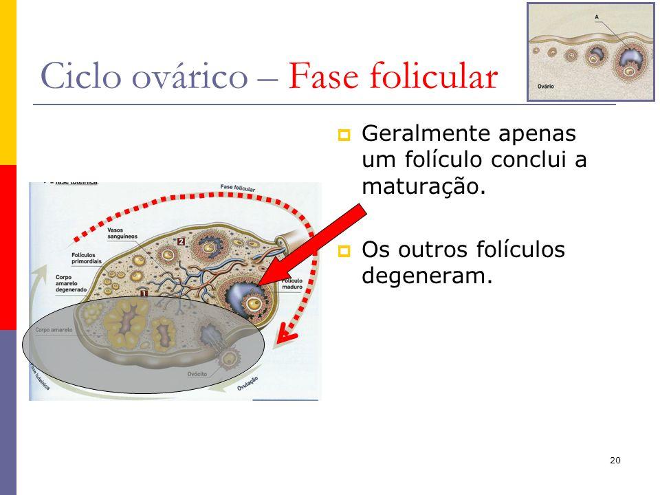 20 Ciclo ovárico – Fase folicular Geralmente apenas um folículo conclui a maturação. Os outros folículos degeneram.