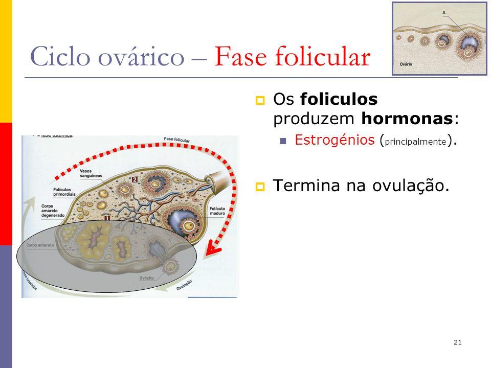 21 Ciclo ovárico – Fase folicular Os foliculos produzem hormonas: Estrogénios ( principalmente ). Termina na ovulação.