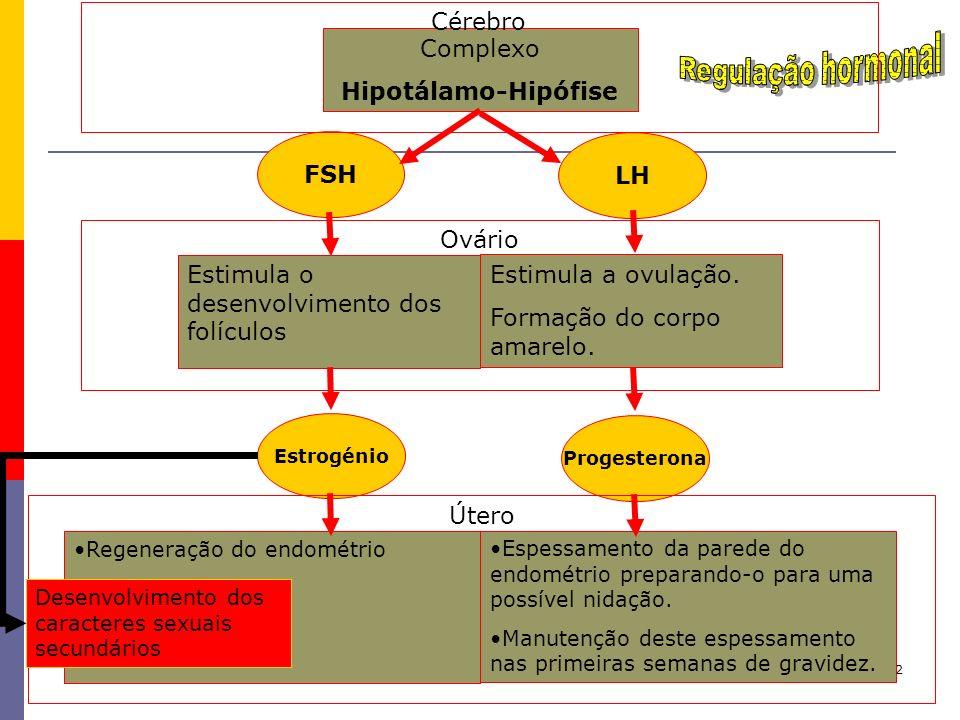 32 Estimula o desenvolvimento dos folículos Estimula a ovulação. Formação do corpo amarelo. Complexo Hipotálamo-Hipófise FSH LH Regeneração do endomét