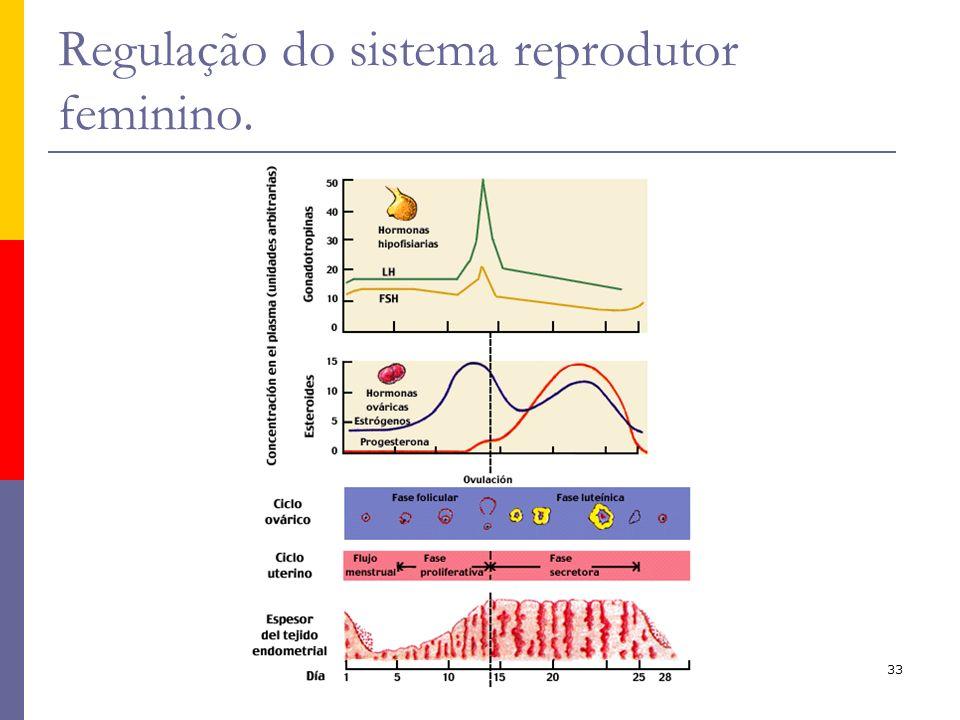 33 Regulação do sistema reprodutor feminino.