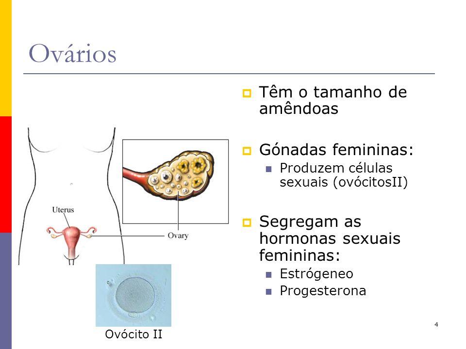 4 Ovários Têm o tamanho de amêndoas Gónadas femininas: Produzem células sexuais (ovócitosII) Segregam as hormonas sexuais femininas: Estrógeneo Proges