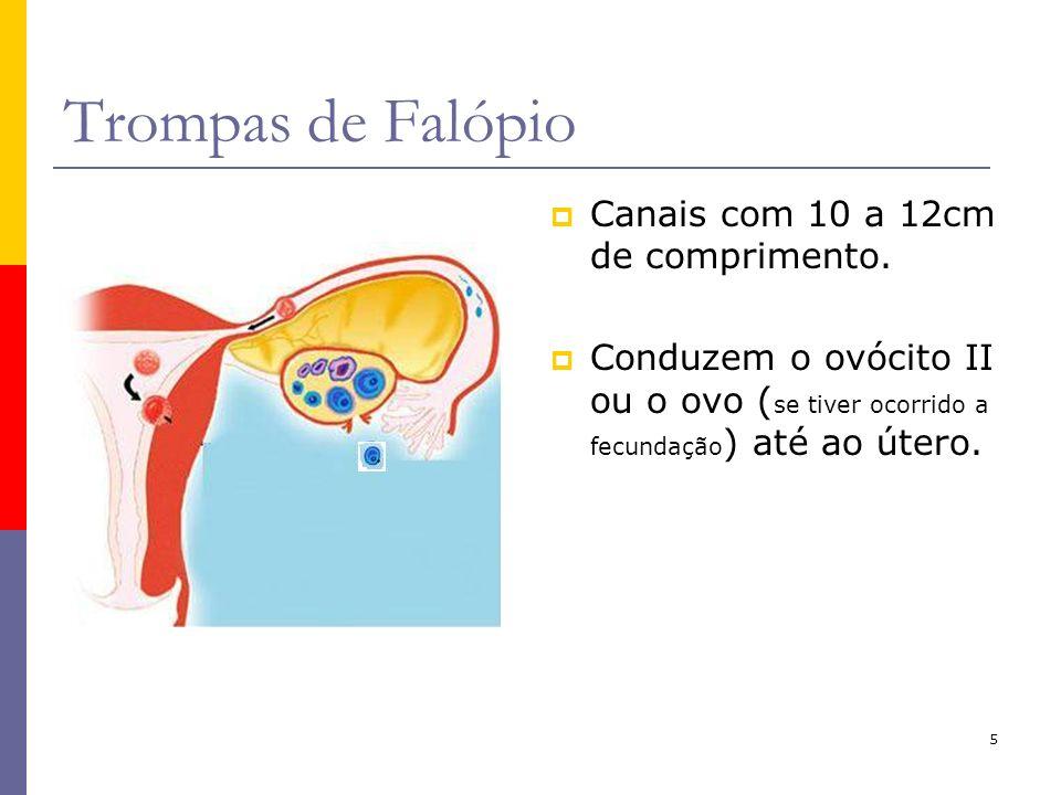 5 Trompas de Falópio Canais com 10 a 12cm de comprimento. Conduzem o ovócito II ou o ovo ( se tiver ocorrido a fecundação ) até ao útero.