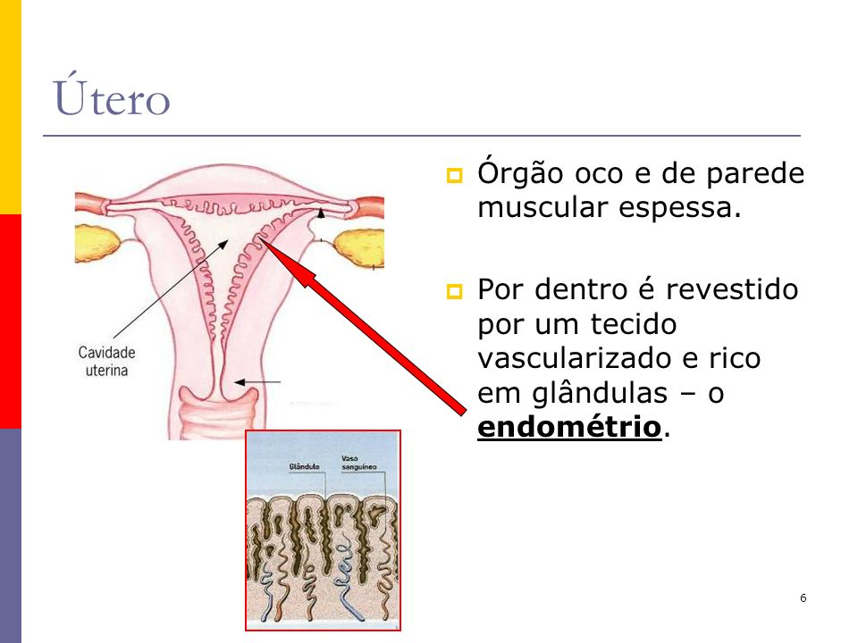 6 Útero Órgão oco e de parede muscular espessa. Por dentro é revestido por um tecido vascularizado e rico em glândulas – o endométrio.