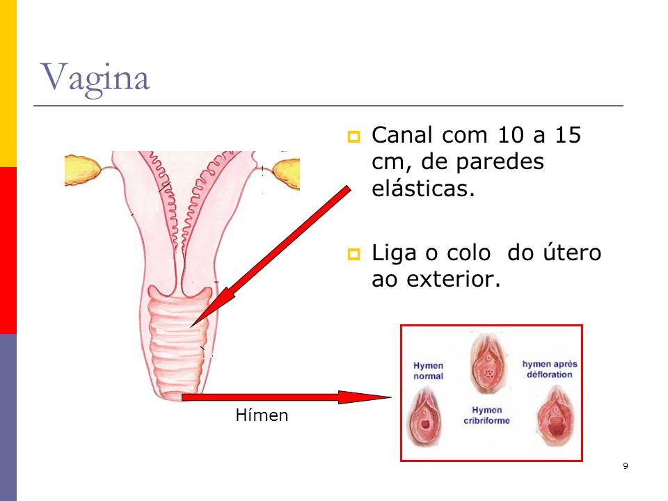 9 Vagina Canal com 10 a 15 cm, de paredes elásticas. Liga o colo do útero ao exterior. Hímen