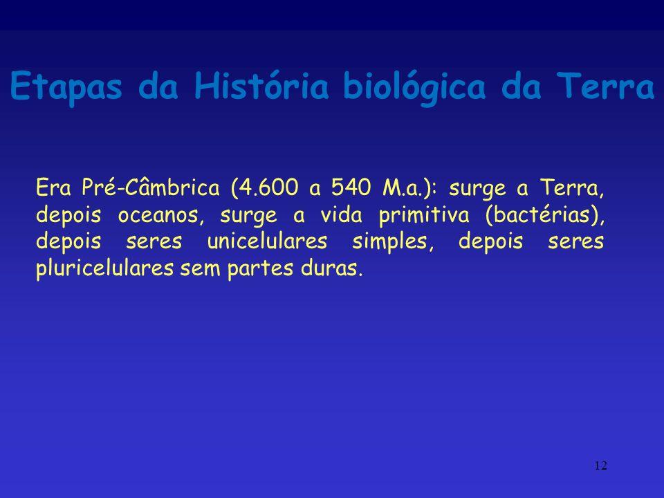 12 Etapas da História biológica da Terra Era Pré-Câmbrica (4.600 a 540 M.a.): surge a Terra, depois oceanos, surge a vida primitiva (bactérias), depoi