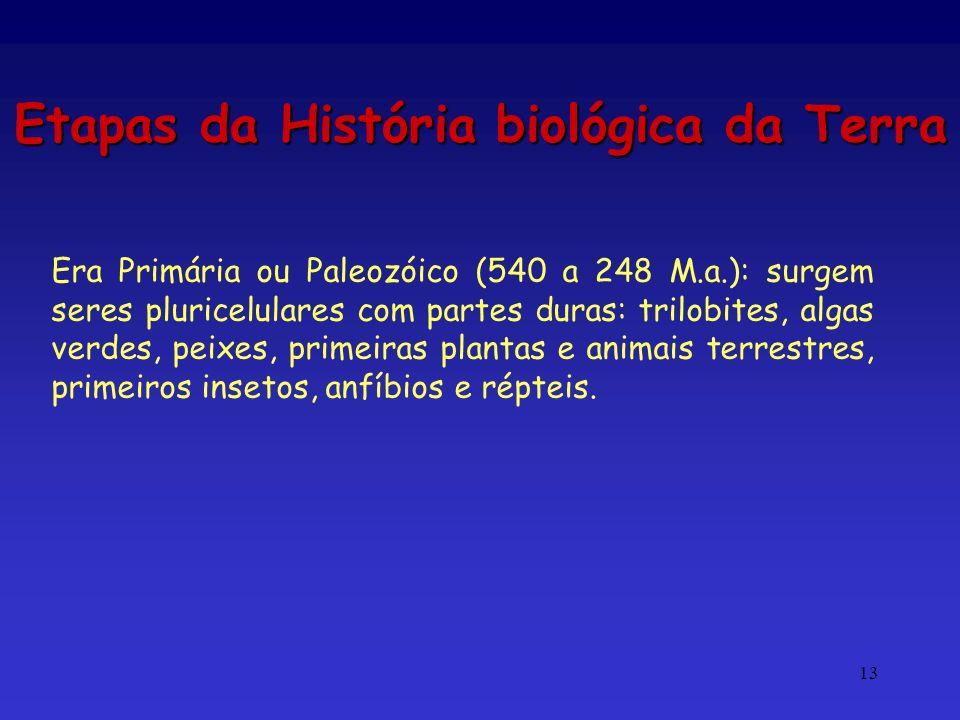 13 Etapas da História biológica da Terra Era Primária ou Paleozóico (540 a 248 M.a.): surgem seres pluricelulares com partes duras: trilobites, algas