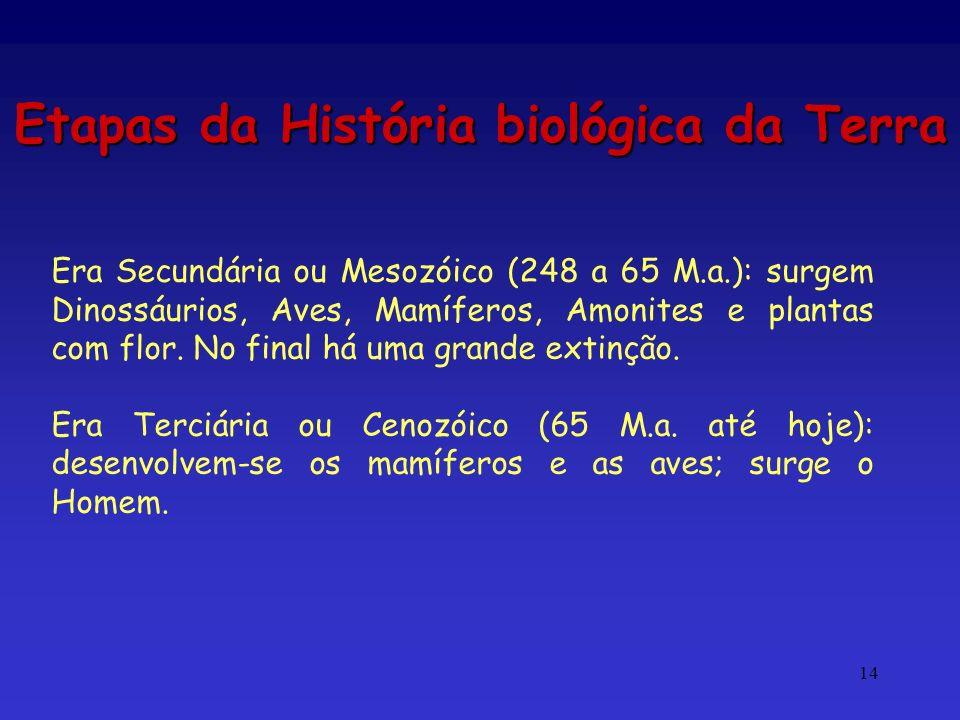 14 Etapas da História biológica da Terra Era Secundária ou Mesozóico (248 a 65 M.a.): surgem Dinossáurios, Aves, Mamíferos, Amonites e plantas com flo
