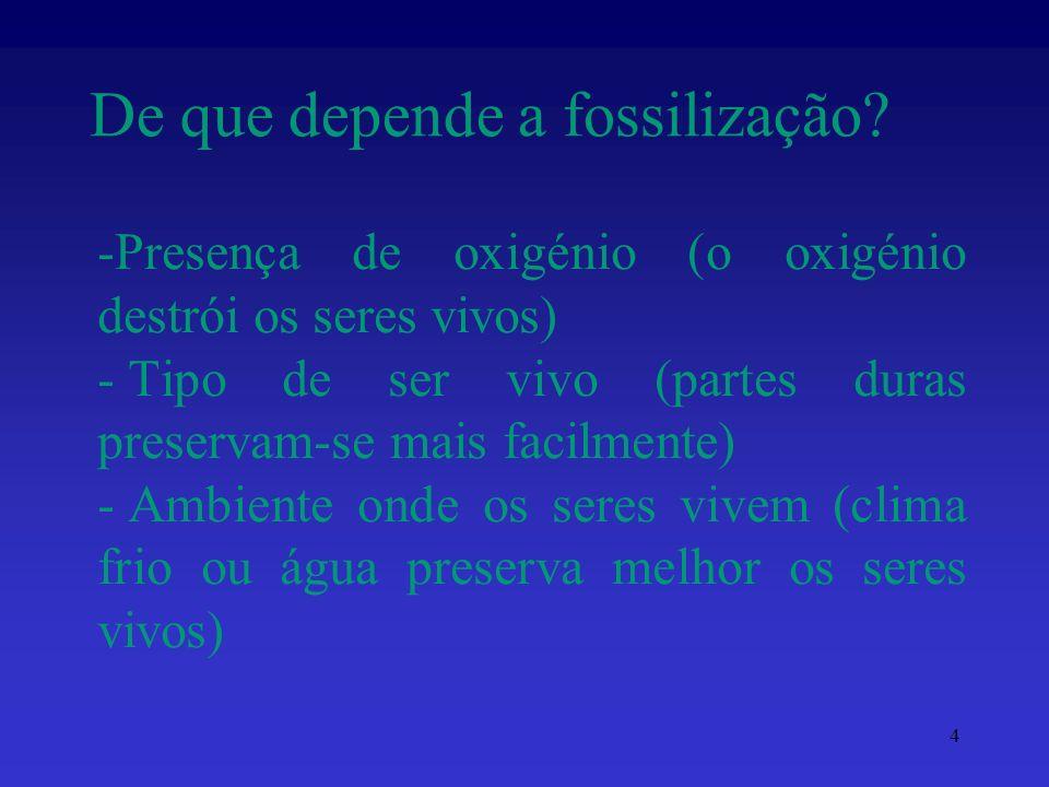 De que depende a fossilização? 4 -Presença de oxigénio (o oxigénio destrói os seres vivos) - Tipo de ser vivo (partes duras preservam-se mais facilmen