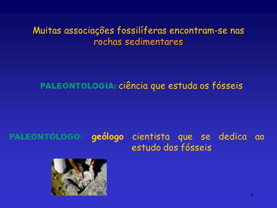 6 Muitas associações fossilíferas encontram-se nas rochas sedimentares PALEONTOLOGIA: ciência que estuda os fósseis PALEONTÓLOGO : geólogo cientista q