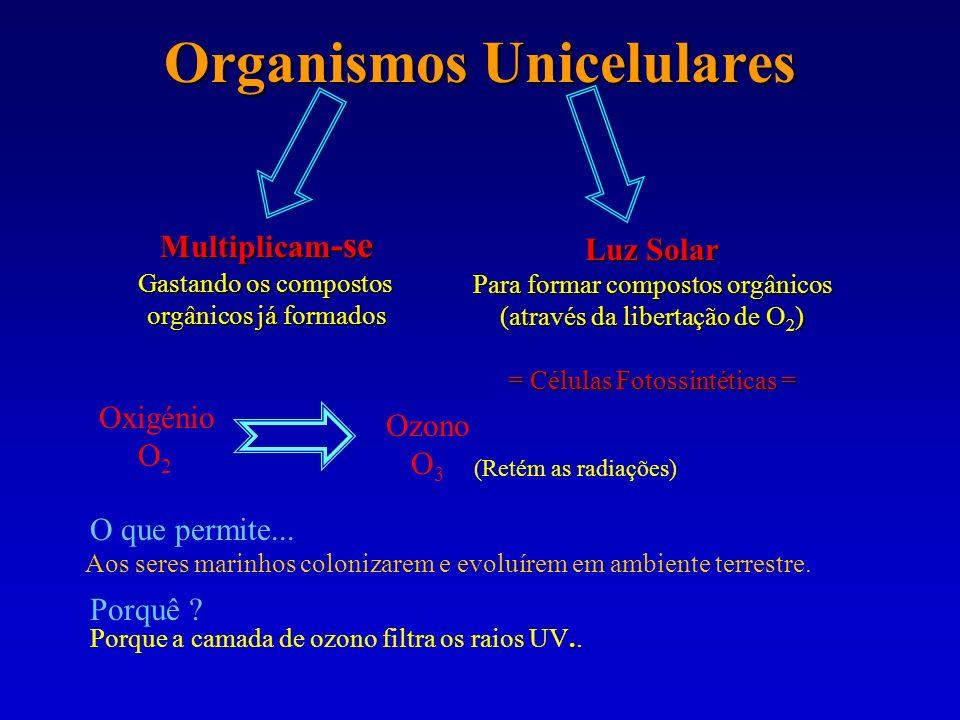 Organismos Unicelulares Multiplicam -se Gastando os compostos orgânicos já formados Luz Solar Para formar compostos orgânicos (através da libertação d