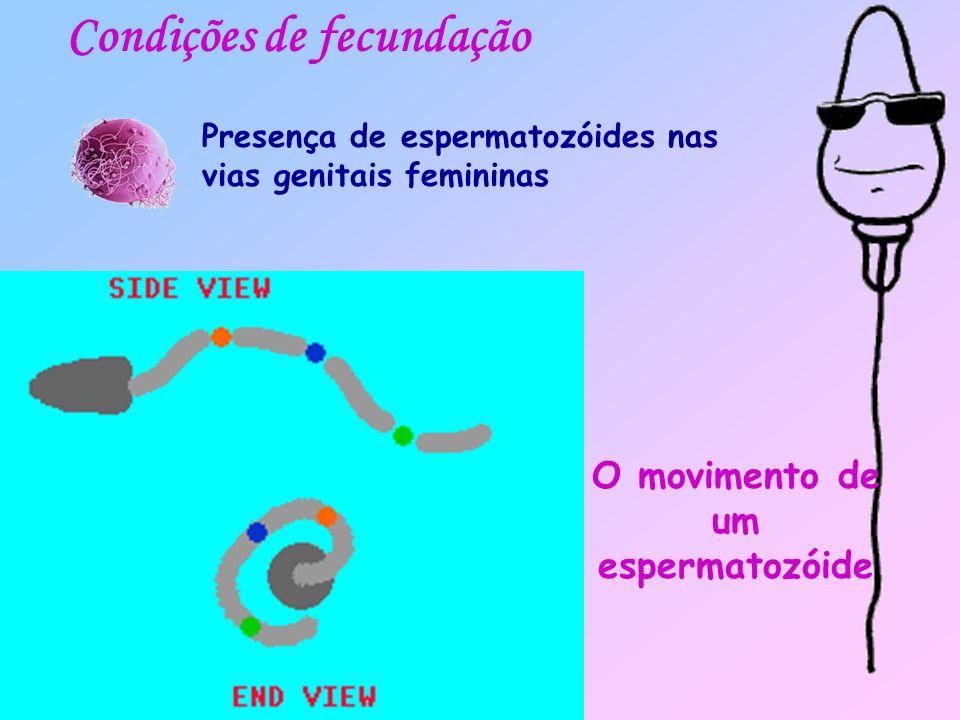Durante o período de ovulação, o colo do útero fica bem aberto com um muco alcalino abundante onde é mais fácil a deslocação dos espermatozóides Condições de fecundação