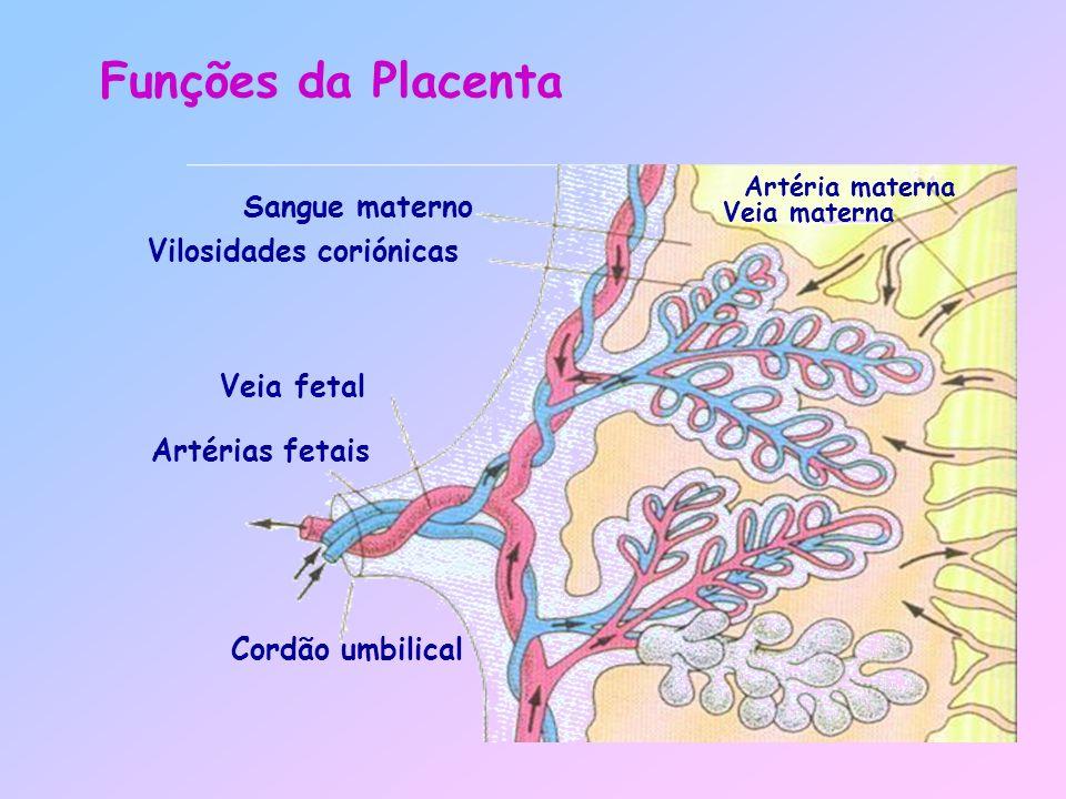 Sangue materno Vilosidades coriónicas Veia fetal Artérias fetais Cordão umbilical Funções da Placenta Artéria materna Veia materna