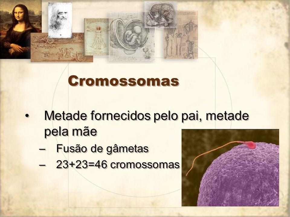 Cromossomas Metade fornecidos pelo pai, metade pela mãe –Fusão de gâmetas –23+23=46 cromossomas Metade fornecidos pelo pai, metade pela mãe –Fusão de