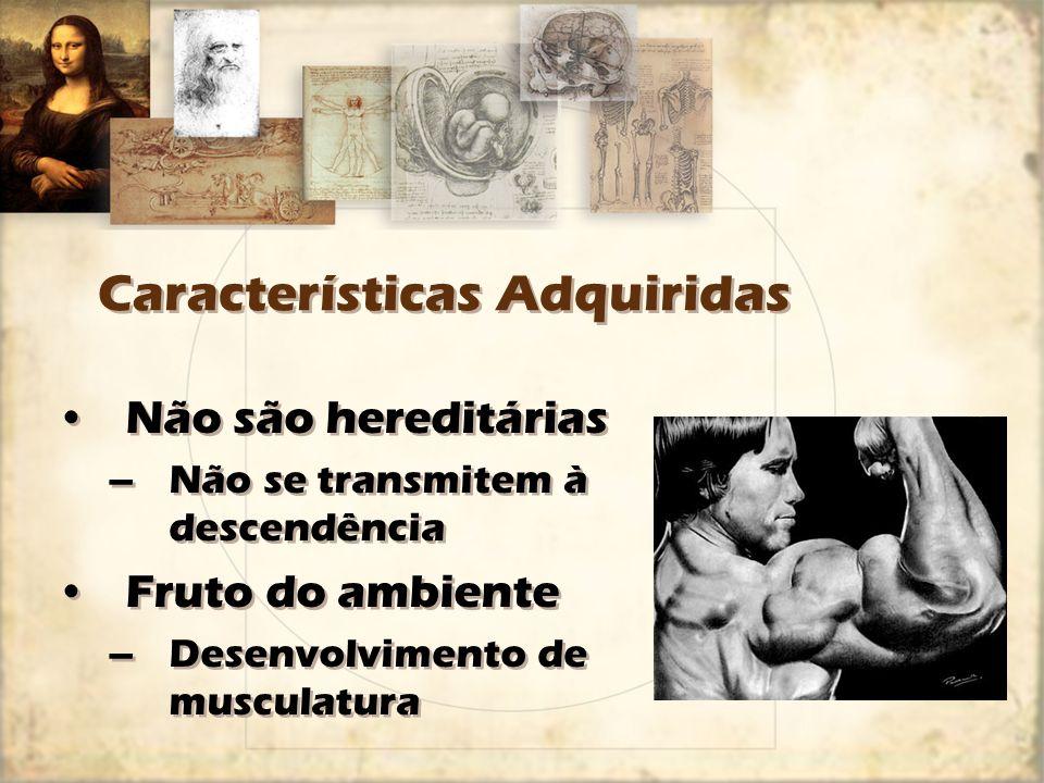 Características Adquiridas Não são hereditárias –Não se transmitem à descendência Fruto do ambiente –Desenvolvimento de musculatura Não são hereditári