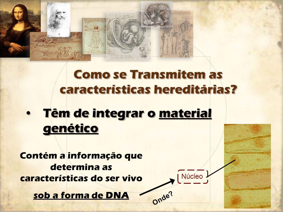 Como se Transmitem as características hereditárias? Têm de integrar o material genético Contém a informação que determina as características do ser vi