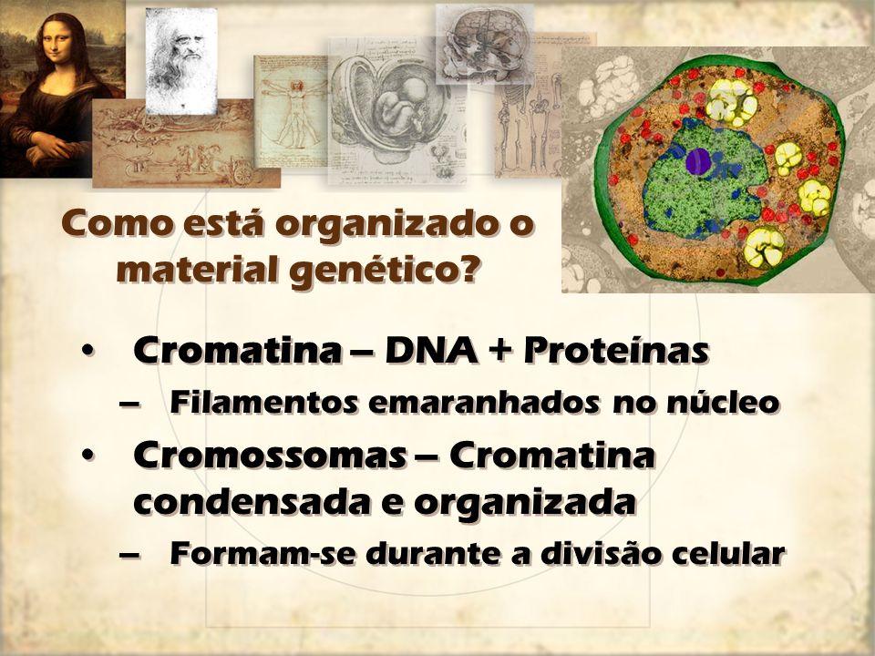 Como está organizado o material genético? Cromatina – DNA + Proteínas –Filamentos emaranhados no núcleo Cromossomas – Cromatina condensada e organizad