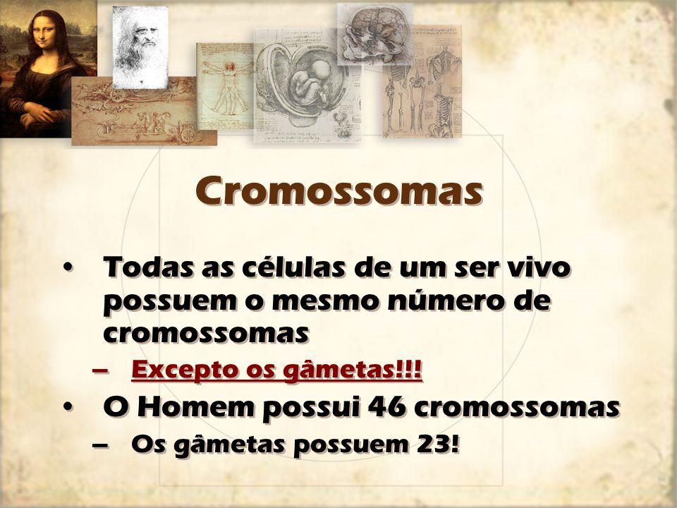 Cromossomas Todas as células de um ser vivo possuem o mesmo número de cromossomas –Excepto os gâmetas!!! O Homem possui 46 cromossomas –Os gâmetas pos
